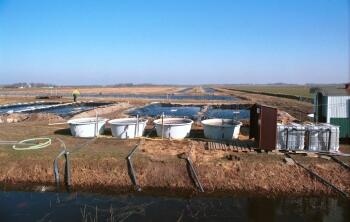 waterzuivering nederland